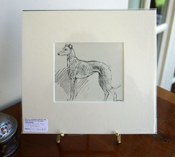 Greyhound - standing - Gre B2 - 1940's print by K F Barker